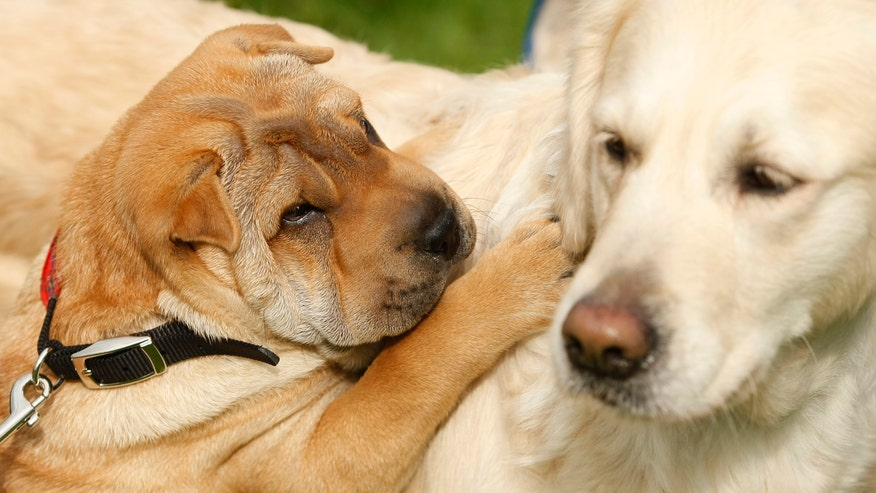 Dogs heal People
