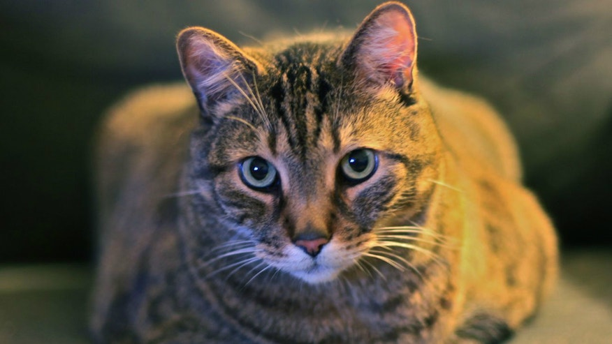 House cat.jpg