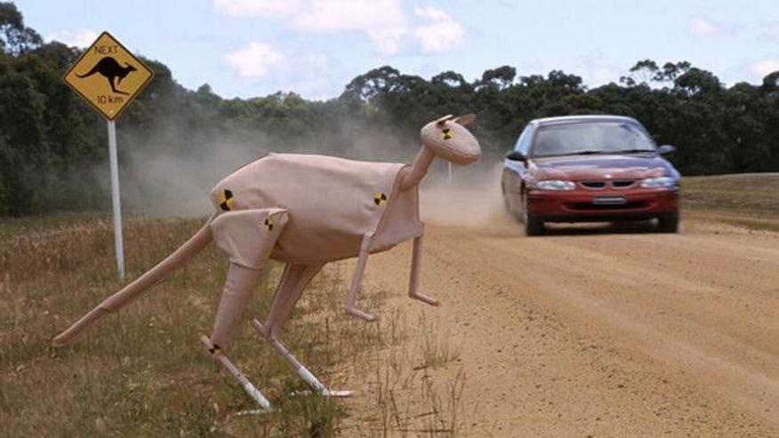 kangaroo-crash-660.jpg