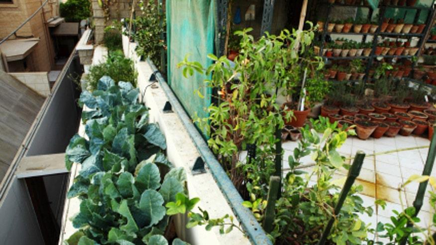 urbangarden660.jpg