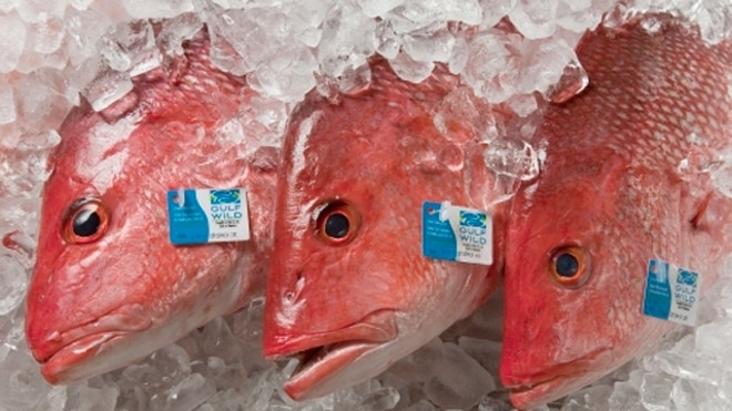 From sea to dish: track your fish dinner | Fox News