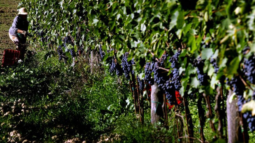 124922-biodynamic-wine.jpg