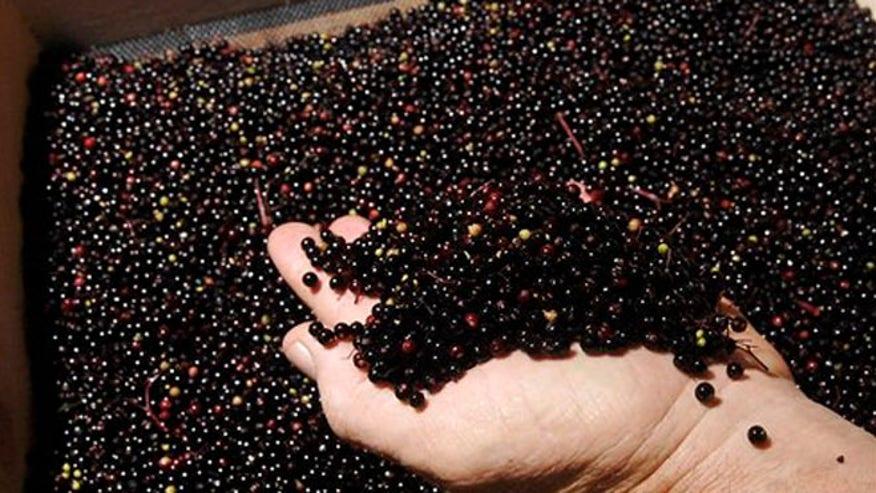 eldeberry.jpg