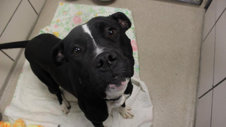 Fort Wayne Indiana Dogs For Adoption
