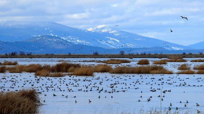 An EPA inspector general report suggests the agency is inflating the success of its wetland preservation programs.