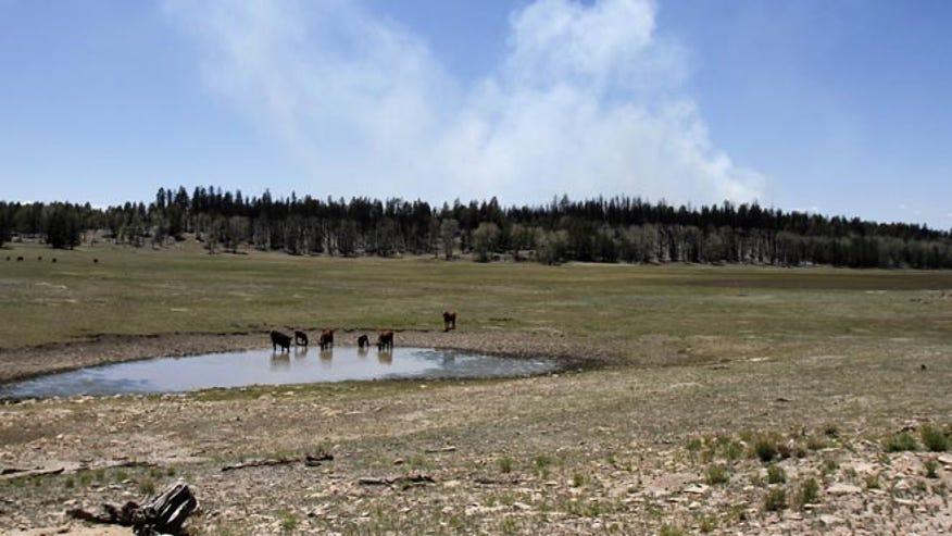 Navajo Wildfire_AP_660.jpg