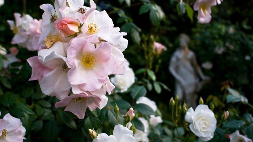 Houzz_Roses3.jpg