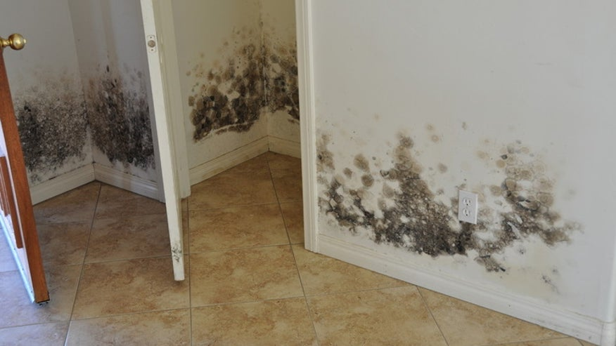 Expert Advice to Prevent and Remove Household Mold