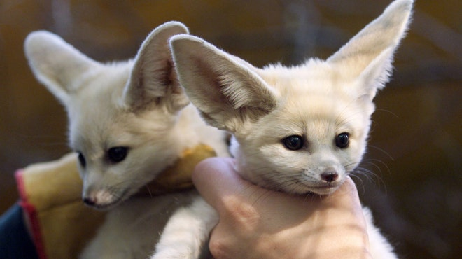 Animals You Didn T Know You Could Have As Pets Slideshow Fox News