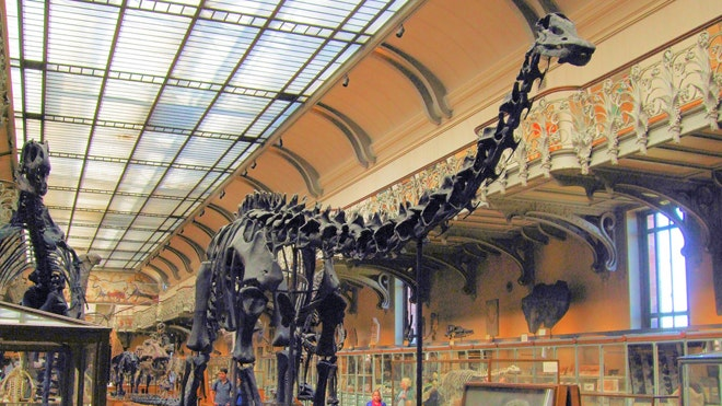 Y Were Dinosaurs So Big Study reveals why dinosaurs