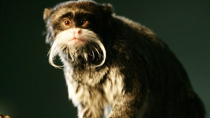 These animals have some serious facial hair.