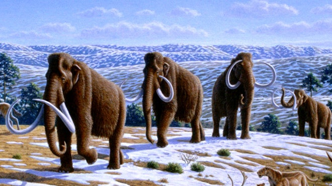 Return of the mammoth? Dolly scientist says beast should be cloned