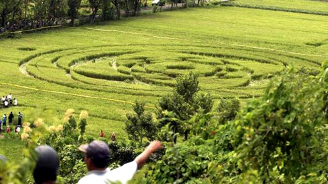 crop circle Indonesia