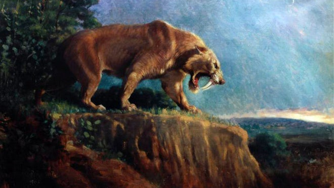 Saber-toothed attacked each other, skulls show