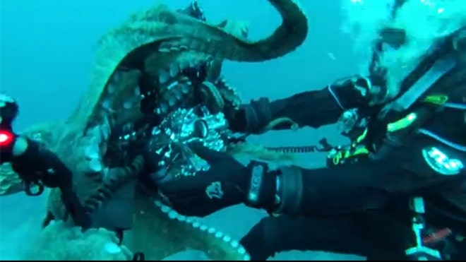 Divers tussle with 8-foot-long octopus