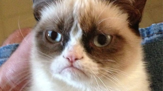 internet finds worldu002639s grumpiest cat named tardar sauce fox news cat picture 660x371