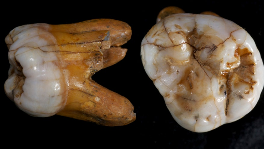 Denisovan genome sequenced a.jpg
