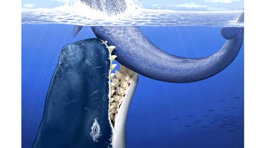 Prehistoric Moby Dick Had Foot-Long Teeth, Hunted Other ...
