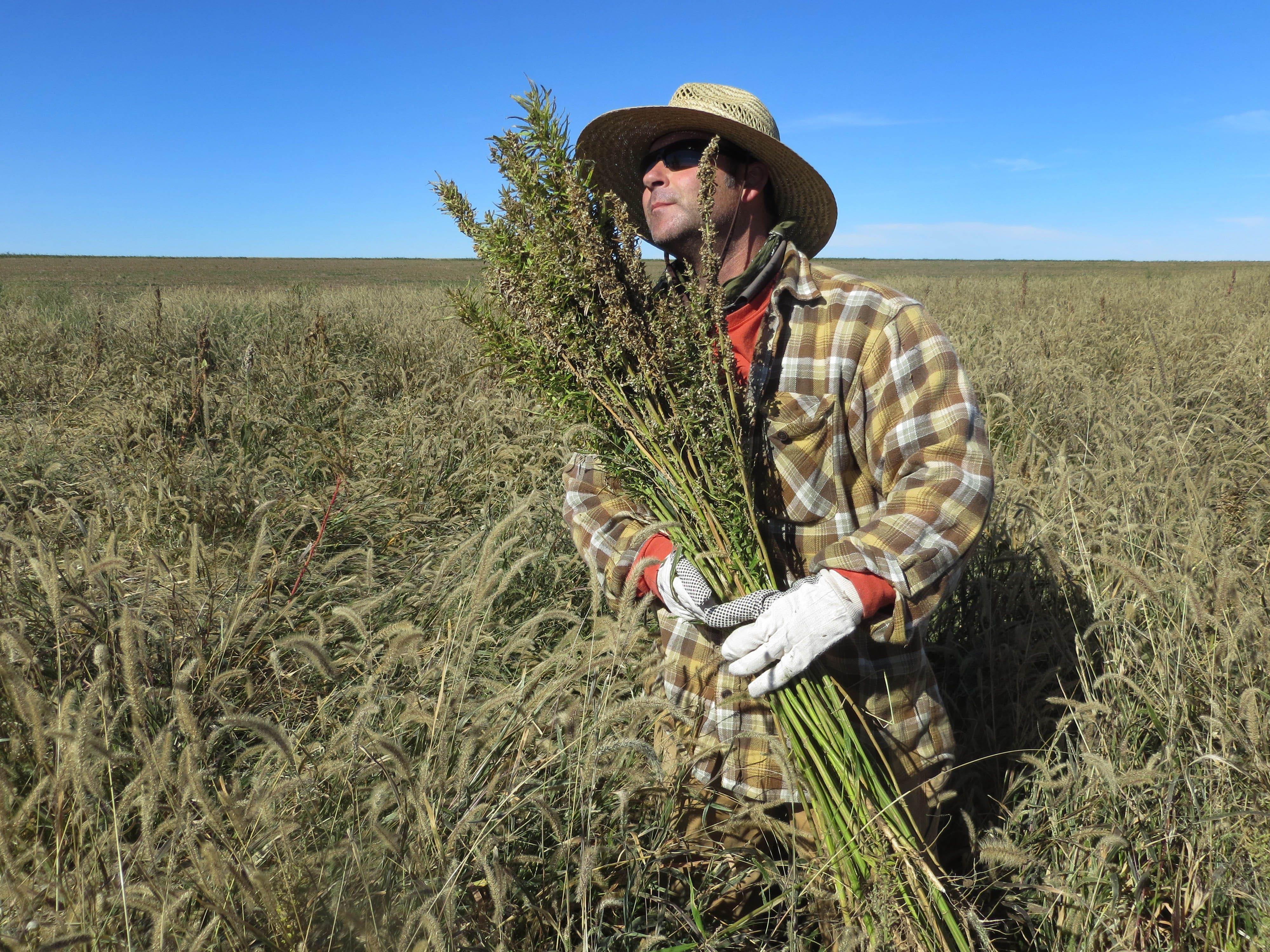 Farmers Harvesting Crops Colorado Farmers Harvesting
