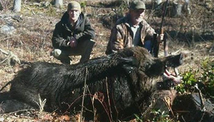 Father, son bag charging 700-pound boar in North Carolina