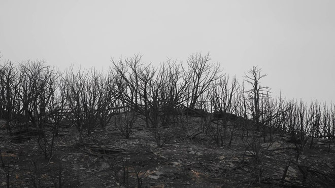 Destruction From Texas Wildfire