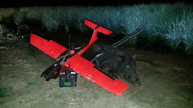 Air hogs: Drones secret weapon in hunt for feral pigs