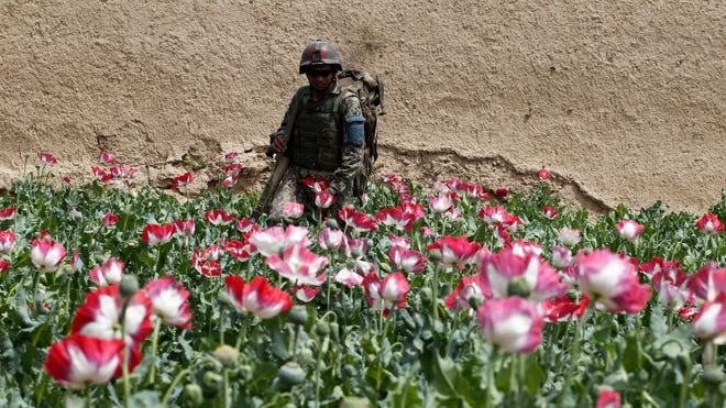 Reuters Afghanistan Poppies.jpg