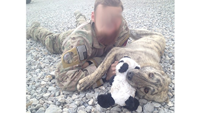When a group of Afghanis were seen firing at the ground in a remote mountain region, alarmed members of a U.S. elite special forces unit came upon a disturbing discovery: A female dog, shot dead, after giving birth to a litter of pups no more than a week old. As the men proceeded to shoot the puppies one by one, U.S. forces swiftly intervened, rescuing two surviving