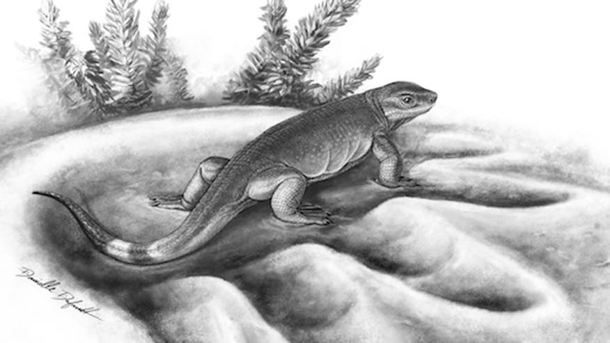 Tiny land-dwelling carnivore evolved into huge vegetarians