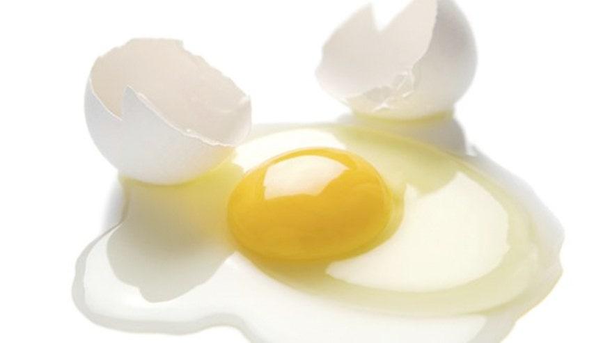 egg_yolk.jpg