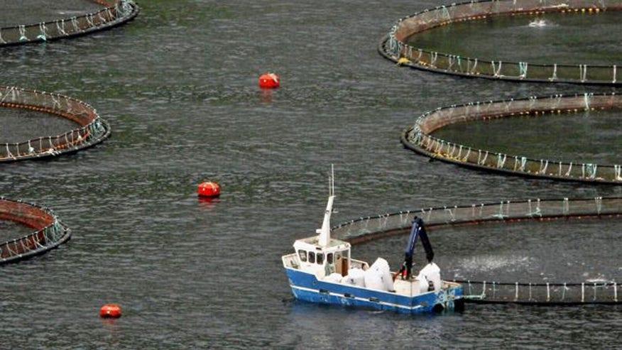 fishfarmreuters.jpg