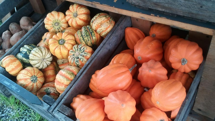 pumpkins640.jpg