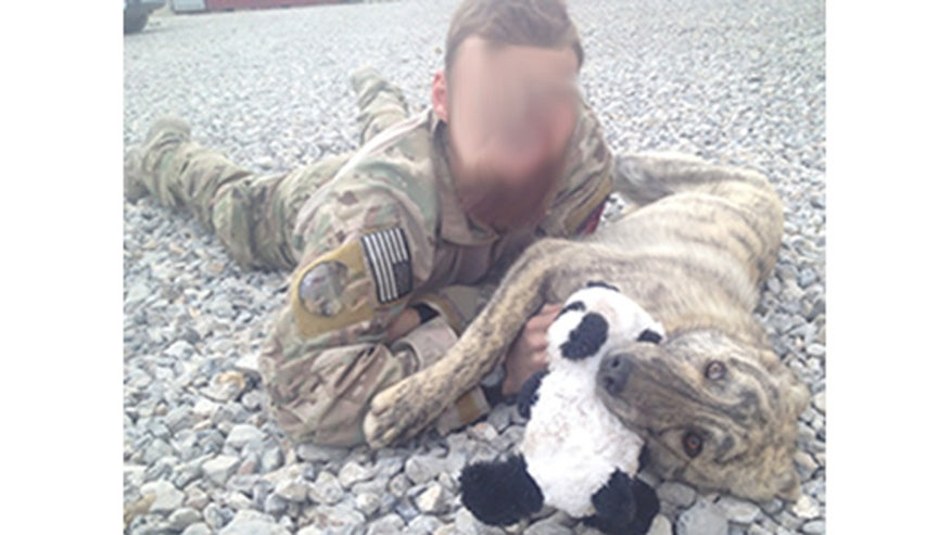 Dogs rescued in Afghanistan to be reunited with American comrades