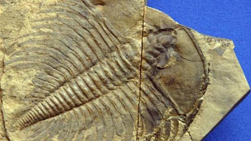 trilobite-extinction.jpg