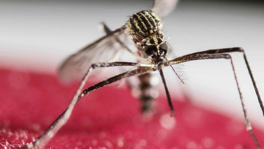 zikavirusbug.jpg