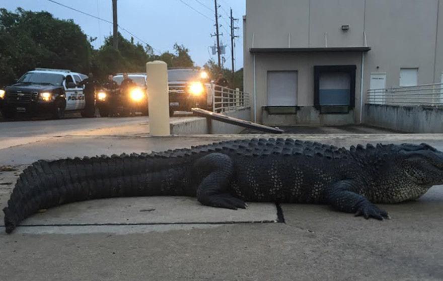 Godzillagator1.jpg