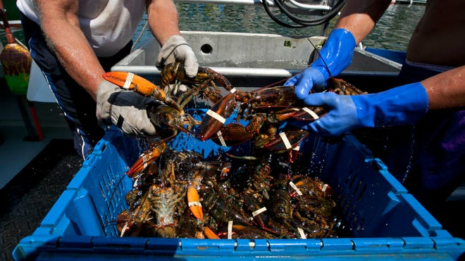 Holland america to buy maine lobster fox news