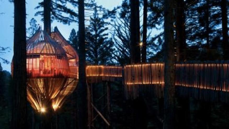 AOLre_RedwoodsTreehouse.jpg