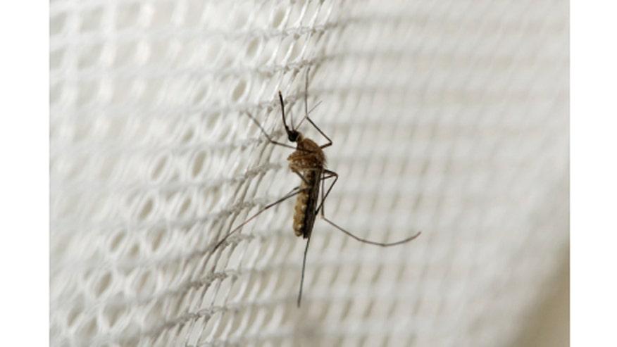 iStock_XSmall_mosquito660.jpg