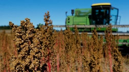 Quinoa's nutritional punch has pushed the grain beyond health food stores and into general consumption, propped up by celebrities like Oprah Winfrey.