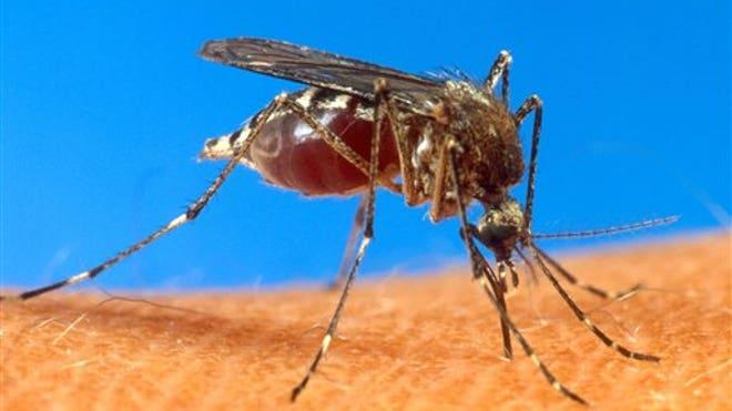 Mosquito_virus.jpg