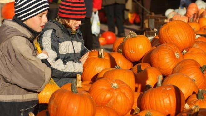 Pumpkin_Picking_1.jpg