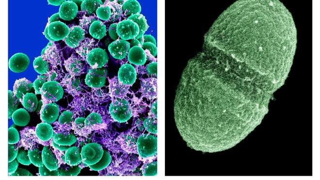 bacterias.jpg