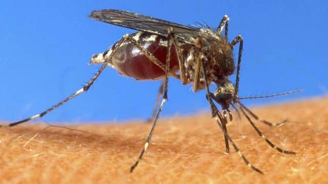 mosquitodengue