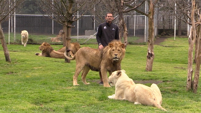 Exotic animals, symbols of macho power for cartel honchos, end up ...
