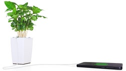 The next time you're in desperate need to charge your dying smart phone, you may be looking for a houseplant and the beautifully designed pot its in, and not your standard charger.