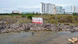 A Mexican court has issued an injunction blocking further work on a real estate project in the Caribbean coast resort of Cancun that activists say has almost killed a mangrove swamp at the site.