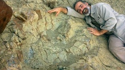 A team of paleontologists found a fossilized footprint measuring . meters – about  feet,  inches – of a bipedal, carnivorous dinosaur that lived in what is now southern Bolivia about  million years ago.