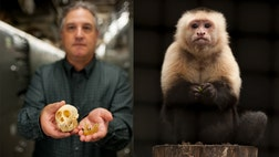 A team of scientists led by Dr. Jonathan Bloch, the curator of vertebrate paleontology at the Florida Museum of Natural History and a professor at the University of Florida, named the pioneering monkey Panamacebus transitus – in honor of the fact the fossils were discovered during the expansion of the Panama Canal.