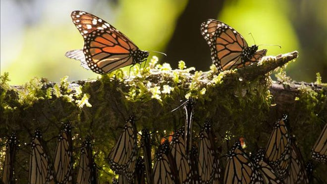 Butterfly_Reserve.jpg